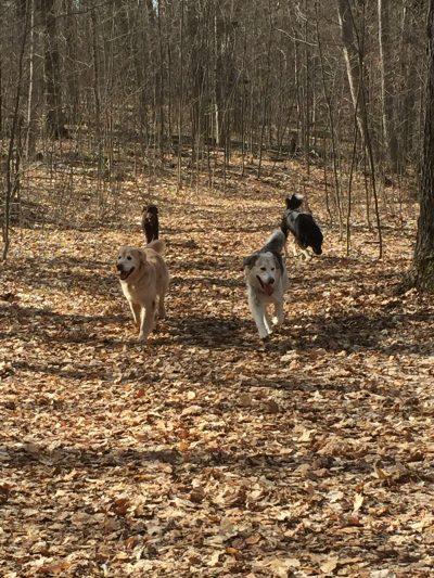 Dog Training Orillia